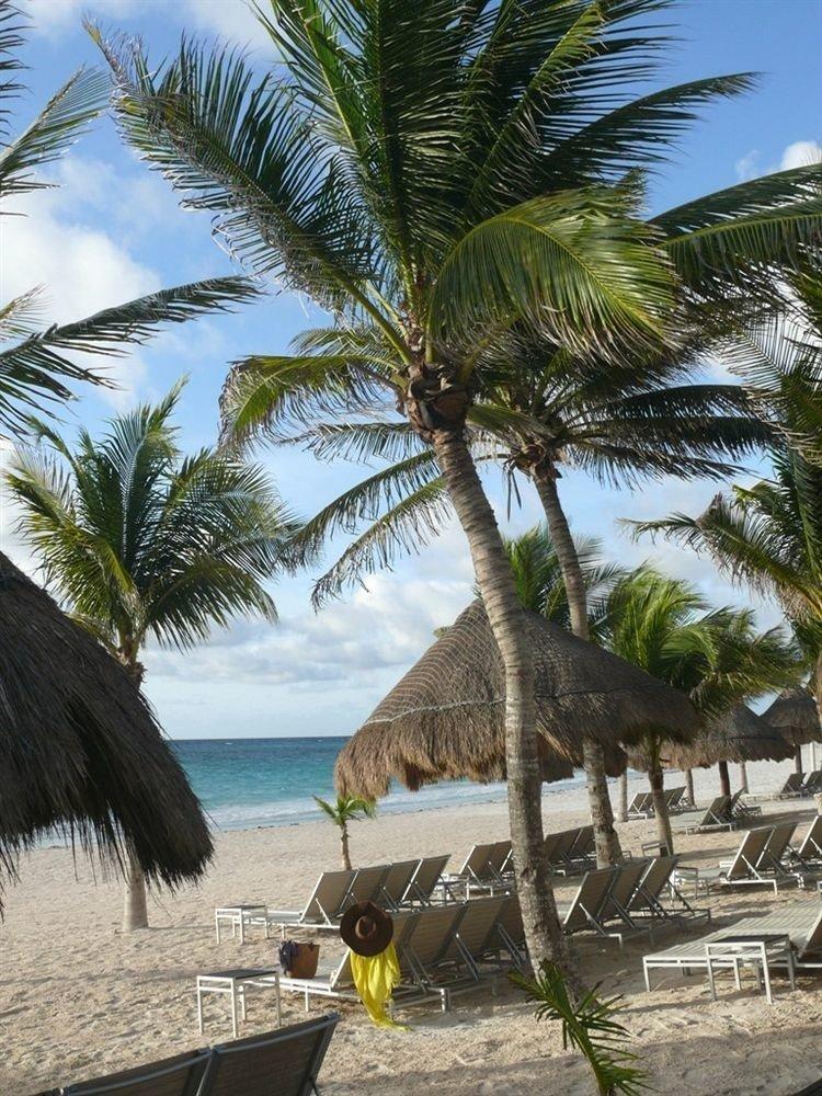 Beach Beachfront Luxury Ocean Tropical tree sky palm water plant palm family caribbean Sea tropics Coast arecales Resort sandy lined shore