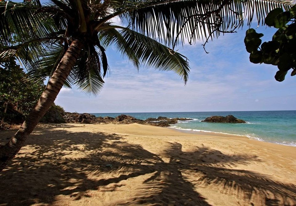 Beach Beachfront tree water sky habitat Nature shore palm Ocean Coast Sea plant tropics arecales caribbean cape sand palm family sandy shade