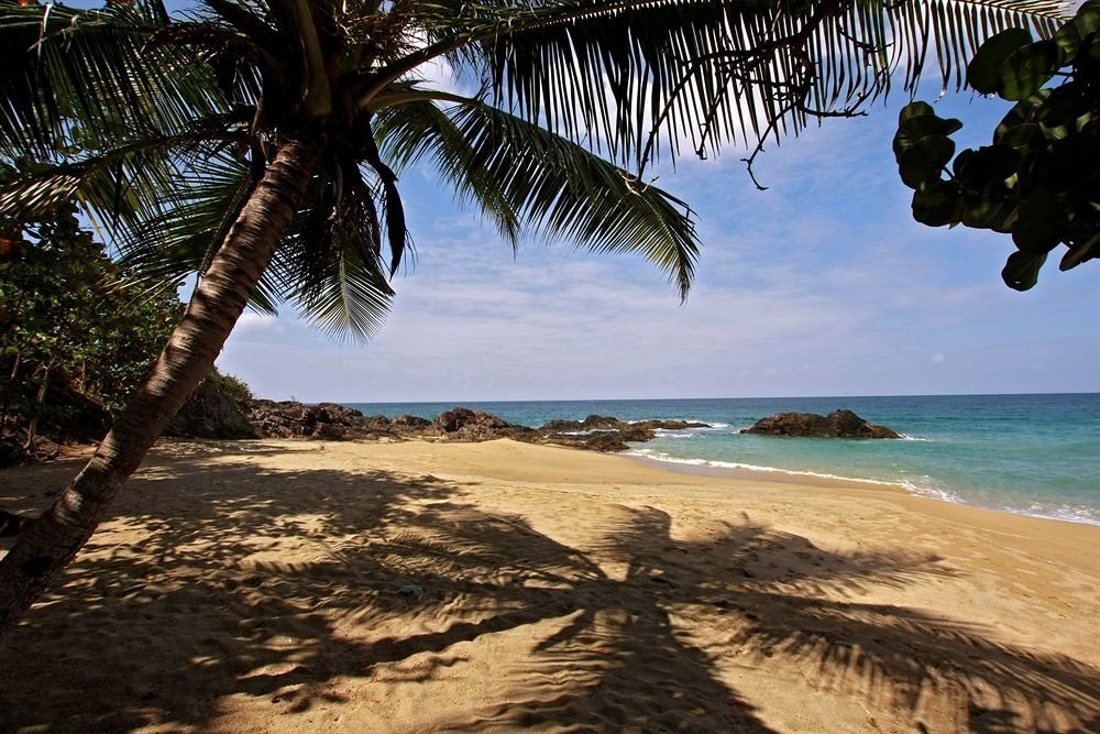 Beach Beachfront tree water sky habitat Nature shore palm Ocean Coast Sea plant tropics arecales caribbean cape sand palm family sandy shade