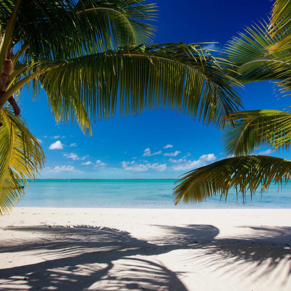 Beach Beachfront Eco Resort Romance Scenic views tree palm water sky plant Ocean palm family tropics Sea caribbean arecales woody plant sunlight Sunset shore sandy shade