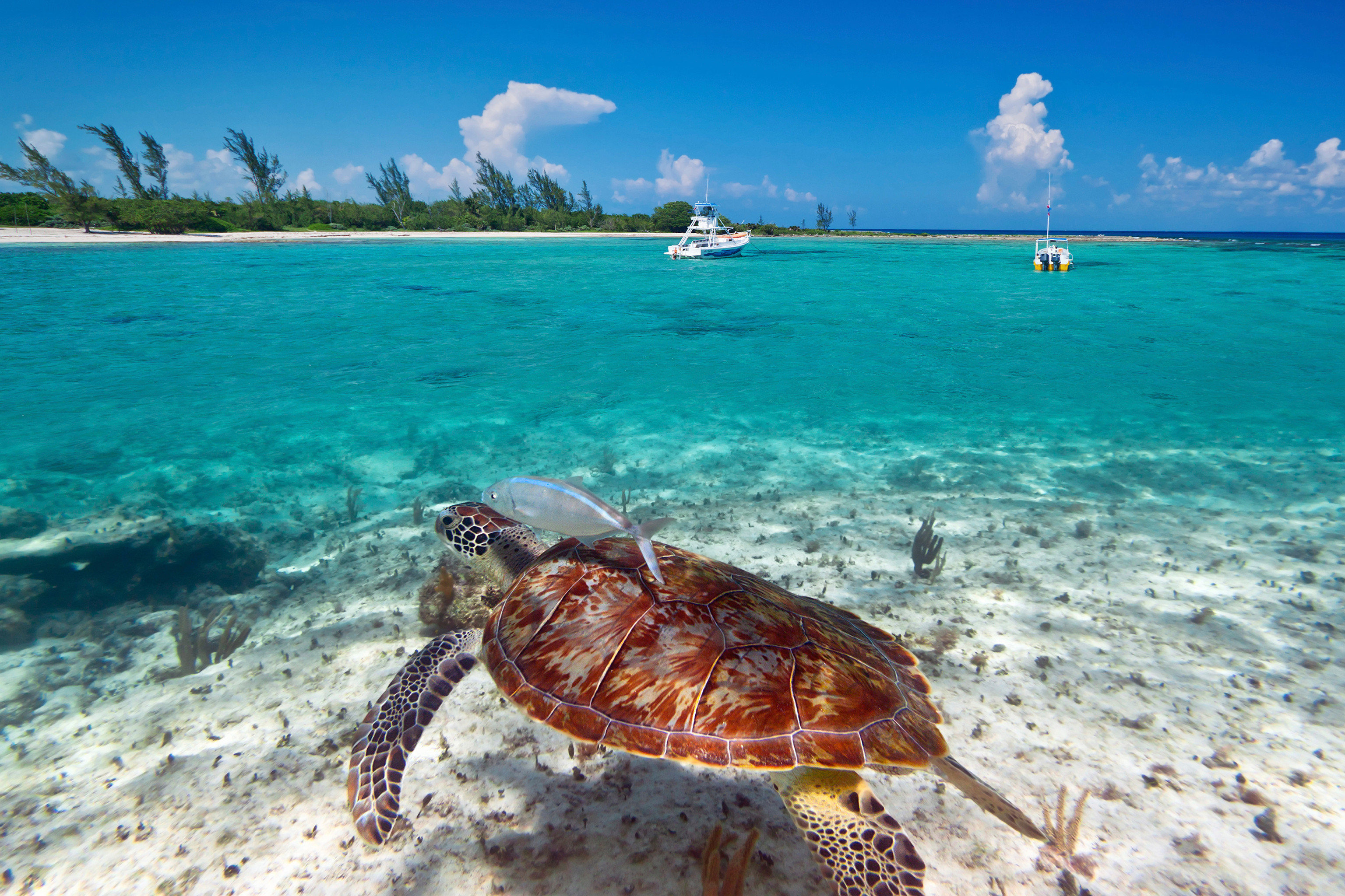 Beach Beachfront Family Ocean Play Trip Ideas Tropical sky water turtle sea turtle marine biology Sea biology reptile loggerhead underwater tropics