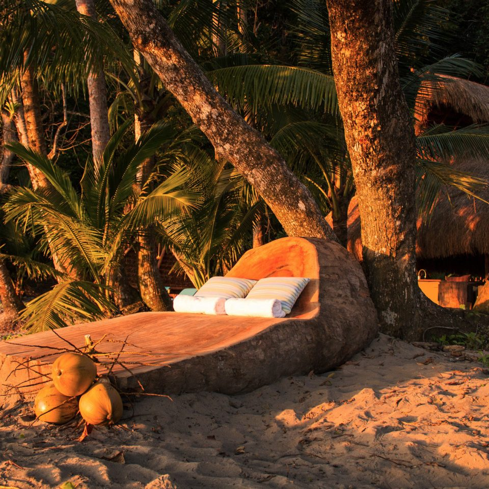 Beach Beachfront Luxury Outdoor Activities Romance Romantic tree ground habitat Nature wilderness natural environment Forest soil night leaf rock woody plant plant autumn sunlight Jungle orange shade surrounded