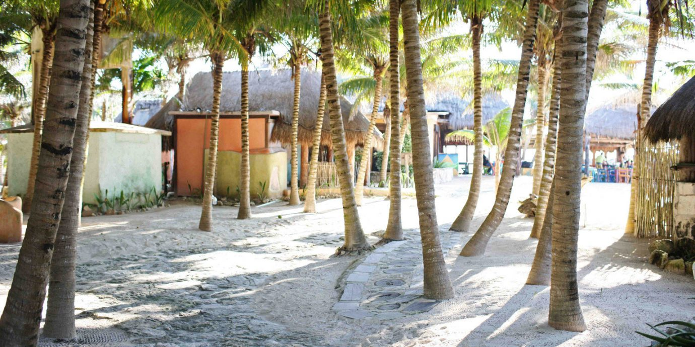 Beach Beachfront Grounds Island tree ground property plant Resort Village home shade