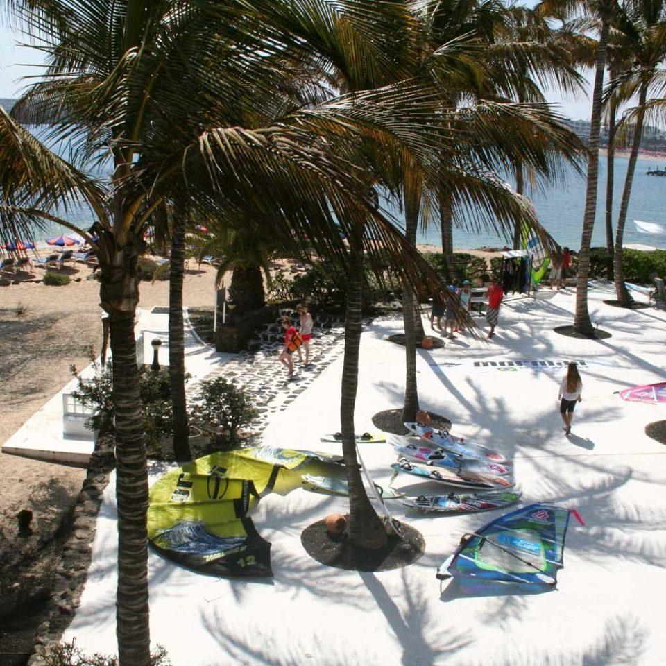 Beach Beachfront Grounds Sunset tree Resort plant palm snow