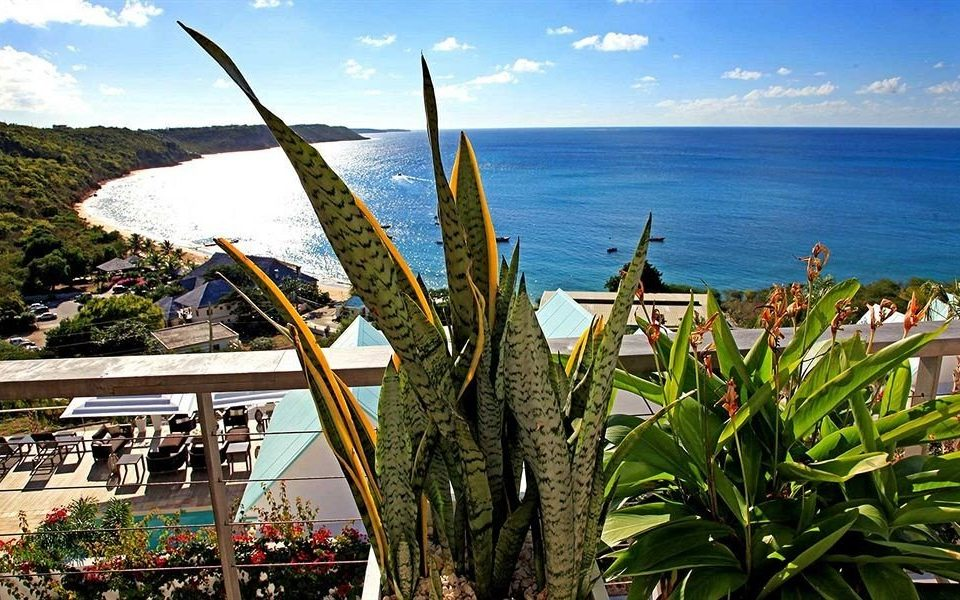 Beach Beachfront Mountains Ocean Tropical sky water plant arecales Sea flower Resort caribbean agave day