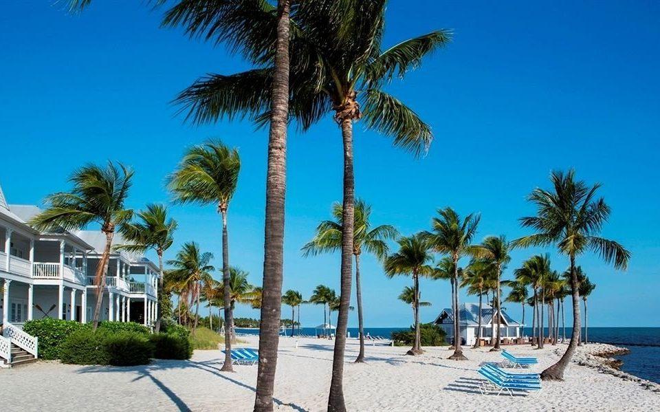 Beach Beachfront Ocean tree sky palm umbrella plant lawn caribbean palm family Pool Resort arecales lined shade Sea tropics sandy shore
