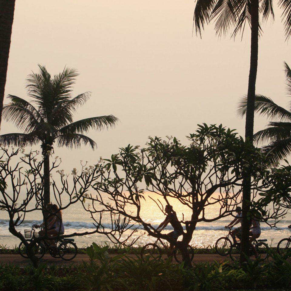 Beach Beachfront Ocean Sunset tree sky plant palm savanna botany palm family arecales woody plant tropics shade sandy
