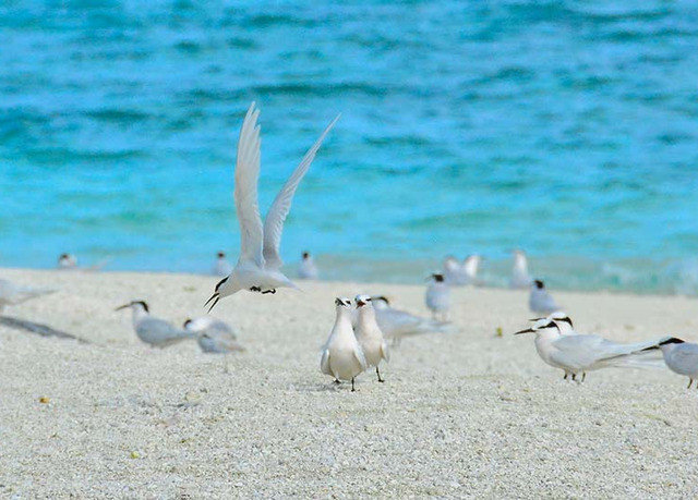 Bird water animal vertebrate Beach shore Sea aquatic bird group standing flock gull seabird Coast Ocean sand charadriiformes sandy