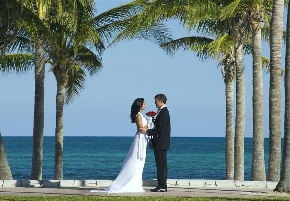tree Beach palm ceremony wedding plant shore