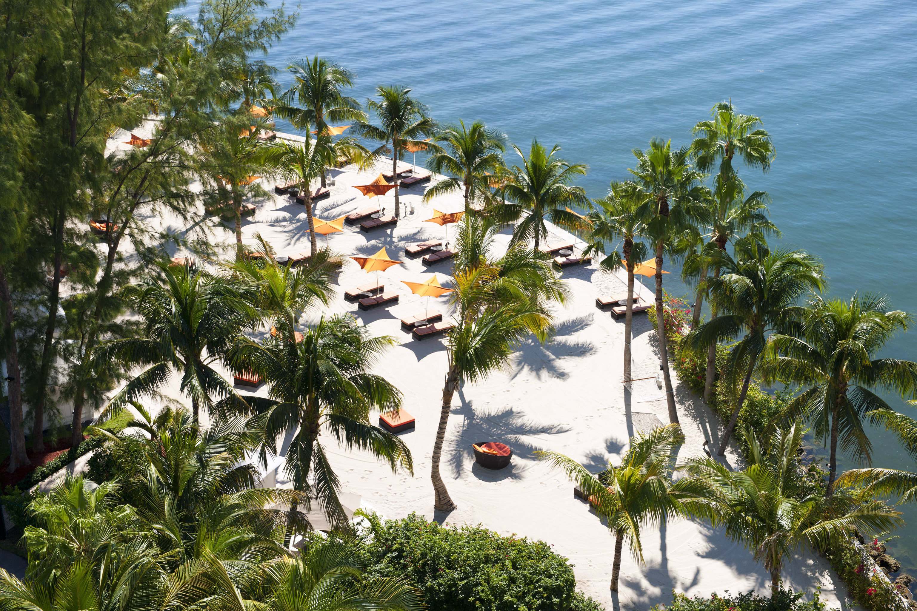 Beach City Grounds Hotels Lounge Luxury Miami Miami Beach Ocean Waterfront tree palm flora plant arecales conifer tropics Nature Coast Resort Jungle flower Sea lined
