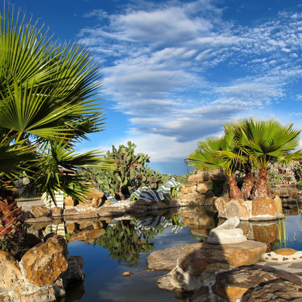 Eco Grounds tree swimming pool rock palm family plant arecales woody plant Sea landscape Ocean Coast palm Nature tropics Resort flower Beach Garden caribbean surrounded day sandy