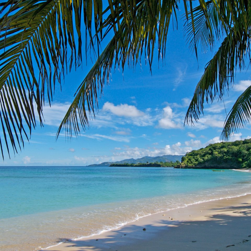 Beach Eco Honeymoon Island Romance Romantic Scenic views Waterfront tree water palm sky Ocean Sea shore caribbean Coast tropics Pool Nature plant arecales palm family sandy wave cape Lagoon sand lined empty sunny shade swimming