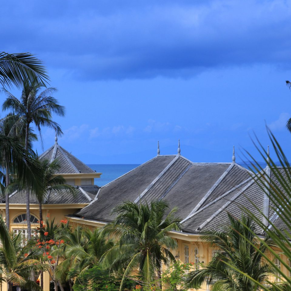 tree sky palm palm family house street arecales tropics Resort caribbean Beach home Coast Sea plant wind bushes lined Garden