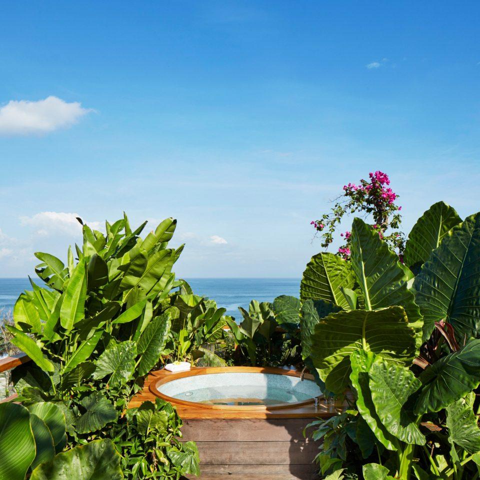 sky flower flora botany Beach tropics Sea Coast Garden Resort caribbean plant tree