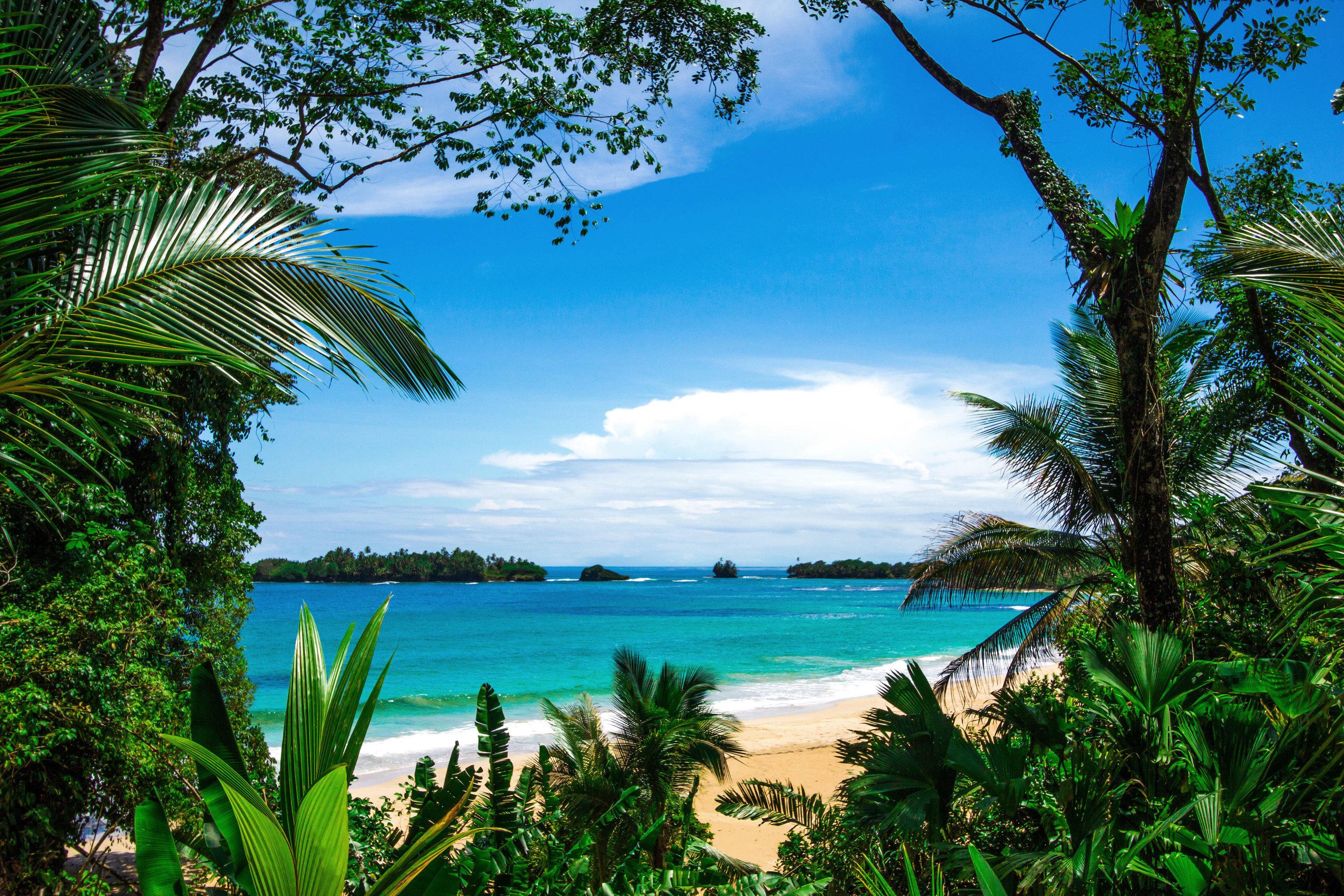tree palm water sky habitat vegetation Beach caribbean tropics ecosystem Ocean Sea Coast palm family arecales Jungle Resort Lagoon Island plant rainforest lined shade shore overlooking beautiful sandy