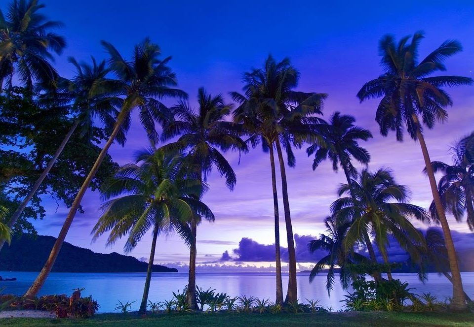 tree palm water sky Beach caribbean palm family Ocean tropics Sea arecales plant woody plant Resort Coast Island Lagoon dusk Lake Jungle lined shade beautiful surrounded