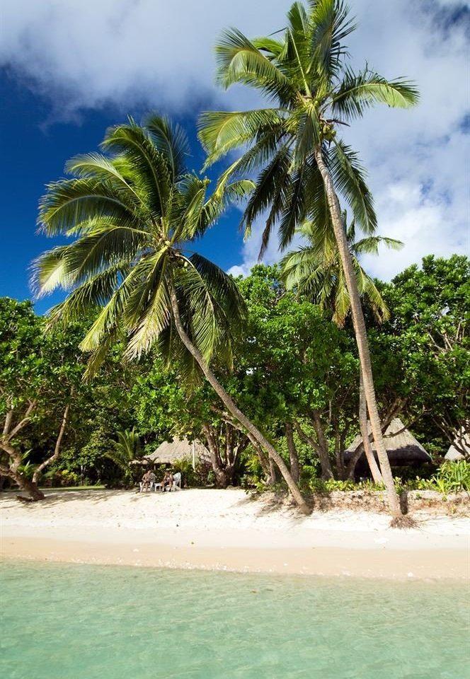 tree palm sky water Beach tropics green caribbean plant palm family Sea botany Coast arecales Ocean woody plant Nature Island Jungle Lagoon rainforest flower sandy islet shore Resort