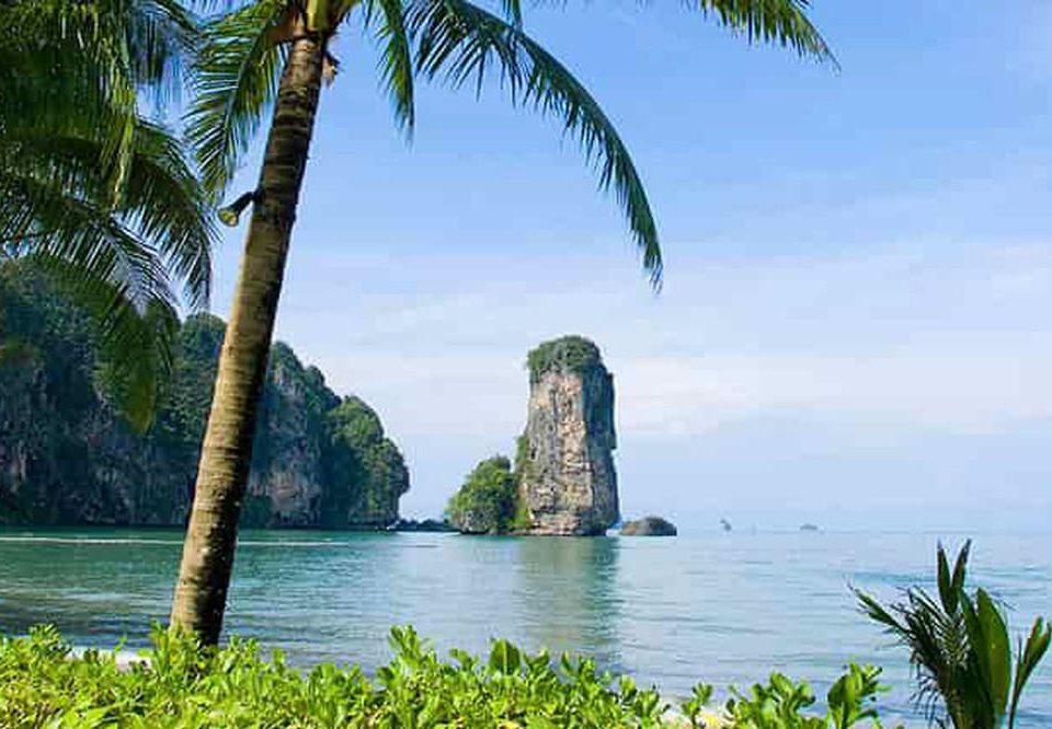 tree water plant palm Coast Lake shore Sea arecales Ocean palm family caribbean tropics Beach Jungle islet Island Lagoon terrain cliff surrounded