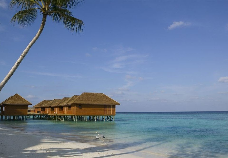 sky water Beach shore Sea Ocean Coast caribbean arecales Nature Resort Island cape Lagoon tropics