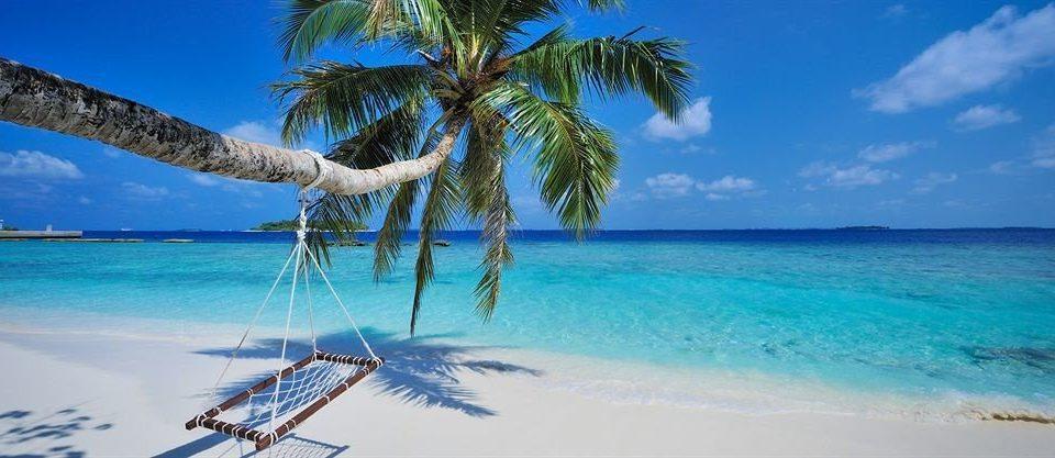 water sky tree Beach caribbean Sea Ocean palm arecales Lagoon Island atoll Coast tropics Resort Pool cape shore islet palm family cay swimming pool swimming distance