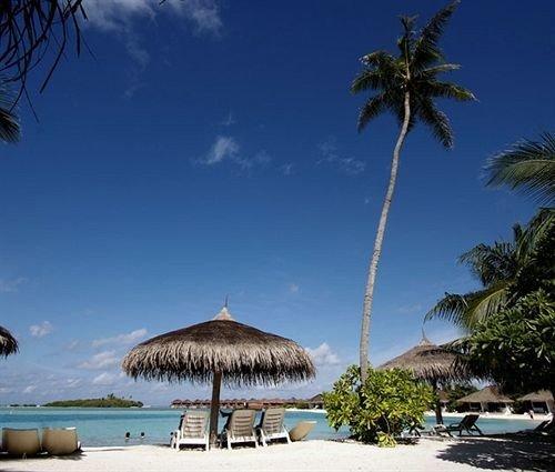sky tree Beach palm caribbean Sea Ocean Resort arecales palm family tropics Coast Lagoon Island lined shade shore sandy day