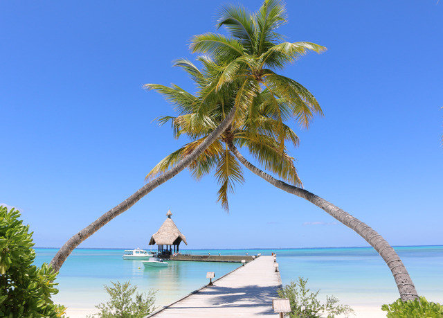 sky tree water palm plant palm family caribbean arecales woody plant Beach tropics Sea Coast Lagoon Island borassus flabellifer Lake Resort shore
