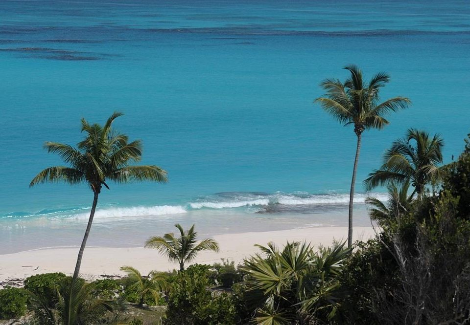 Ocean tree palm water Beach shore Coast Sea caribbean tropics horizon palm family arecales Nature Island cape Pool Lagoon islet plant cove Resort lined shade overlooking sandy