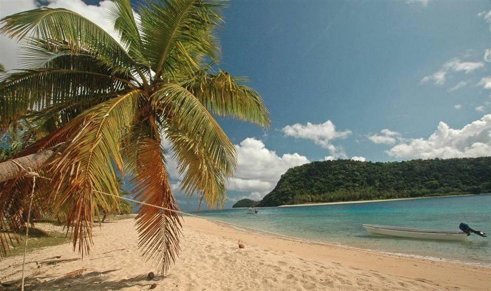 Beach water sky palm caribbean arecales tropics Sea Nature Coast Ocean palm family tree Island Lagoon shore plant sandy lined day