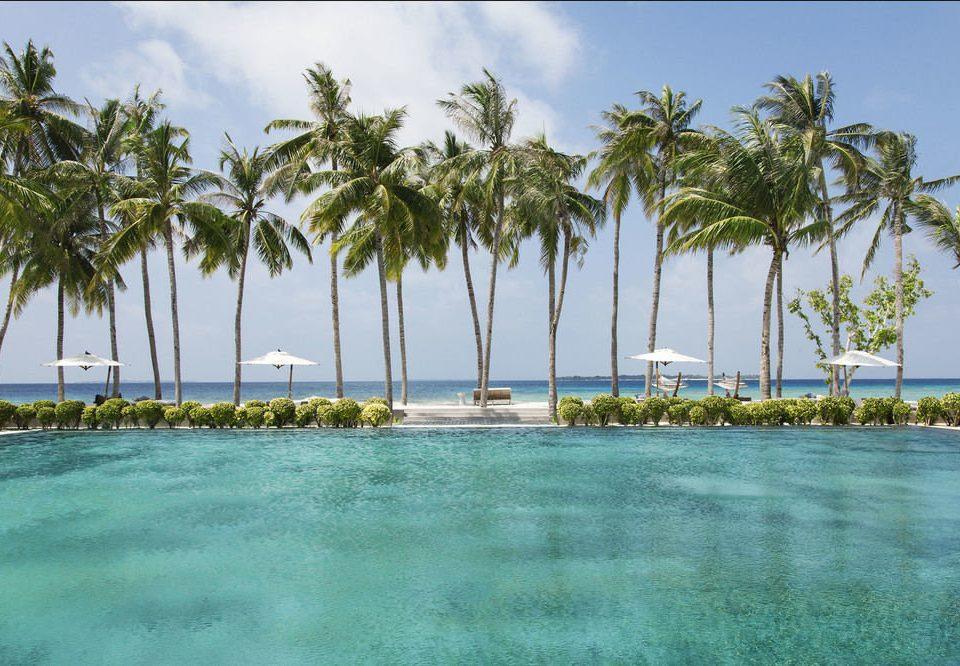 sky tree water palm Beach caribbean Sea Resort arecales shore Ocean Lagoon Coast tropics swimming pool marina palm family Island cay plant