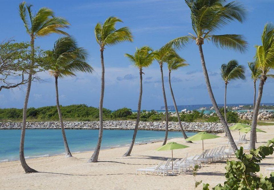 tree sky palm water Beach caribbean shore Ocean Resort arecales plant palm family Lagoon tropics Sea Coast Nature Island cay shade sandy lined