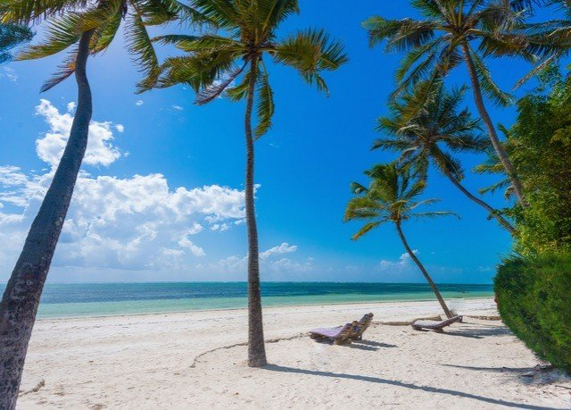 tree sky palm water Beach shore Nature caribbean plant Coast Sea Ocean arecales palm family Island tropics Lagoon Resort wind sandy shade lined