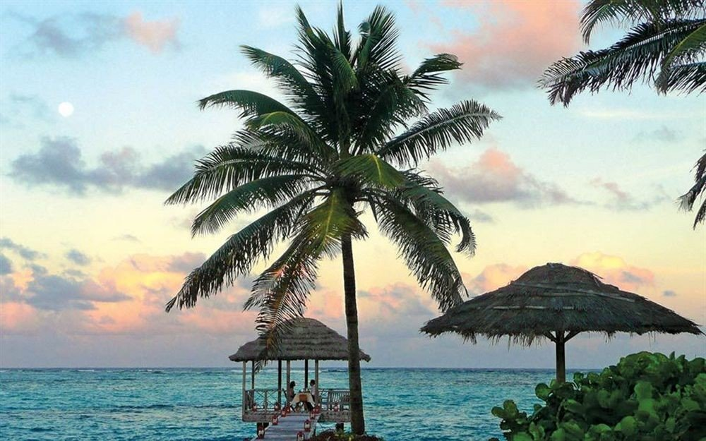 water tree sky palm Beach Ocean umbrella plant caribbean palm family Sea shade tropics arecales Coast Resort Island Lagoon borassus flabellifer Sunset lined shore sandy distance
