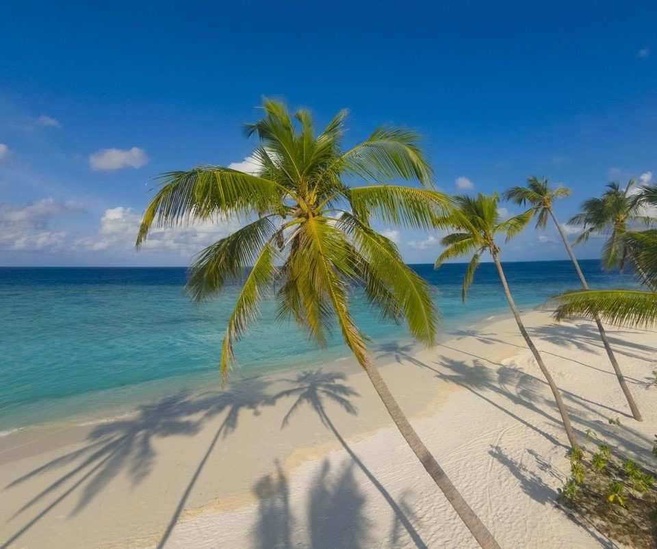 sky water Beach palm tree caribbean Nature Ocean Sea palm family plant shore Coast arecales tropics Island Lagoon sandy
