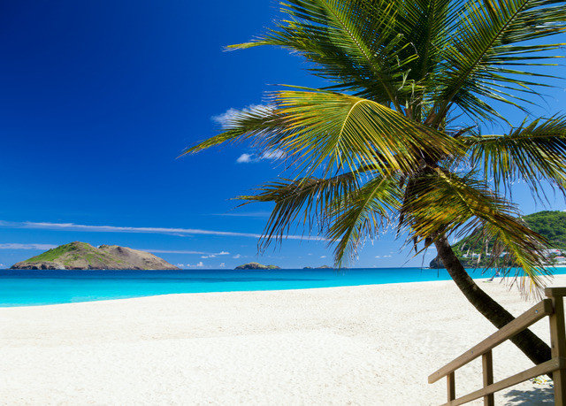 Beach water tree palm sky chair Sea Ocean caribbean palm family shore plant tropics arecales Coast woody plant Pool Island Lagoon sandy shade lined