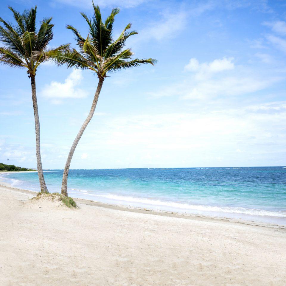 Sea Beach sky tropics shore caribbean coastal and oceanic landforms palm tree Ocean arecales Coast tree cloud horizon daytime water summer Island sand Lagoon