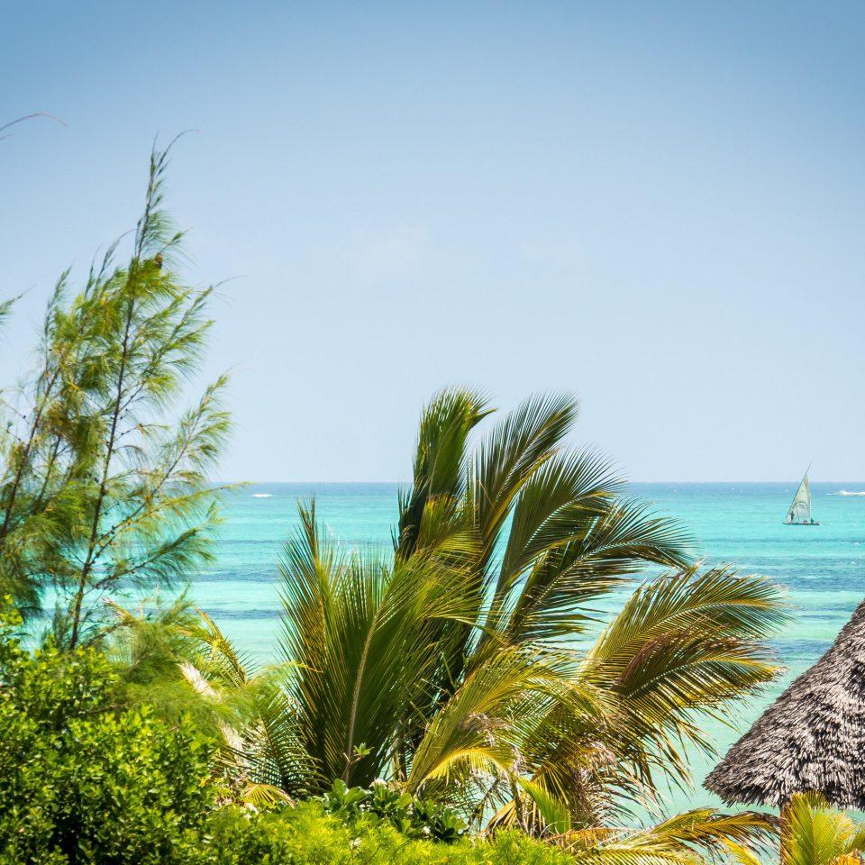 tree sky Nature Beach plant Sea shore Ocean Coast grass tropics caribbean arecales palm family sunlight Island palm