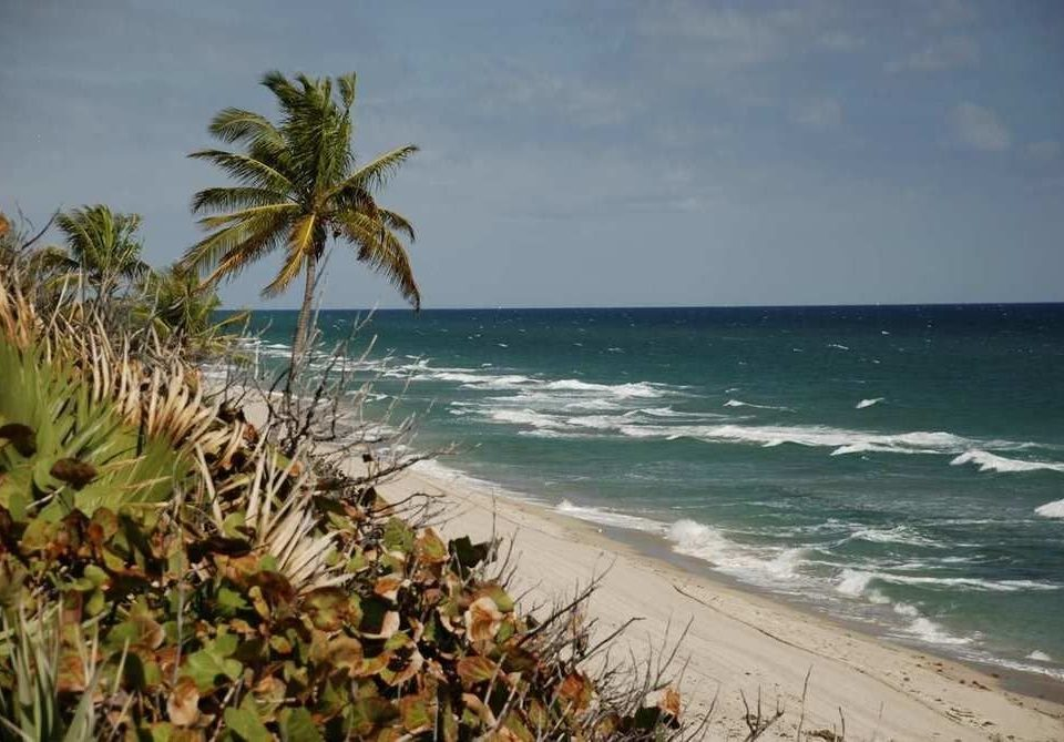 water sky Beach shore Sea Coast Ocean Nature caribbean arecales tropics cape sand wave Island tree palm family plant palm sandy