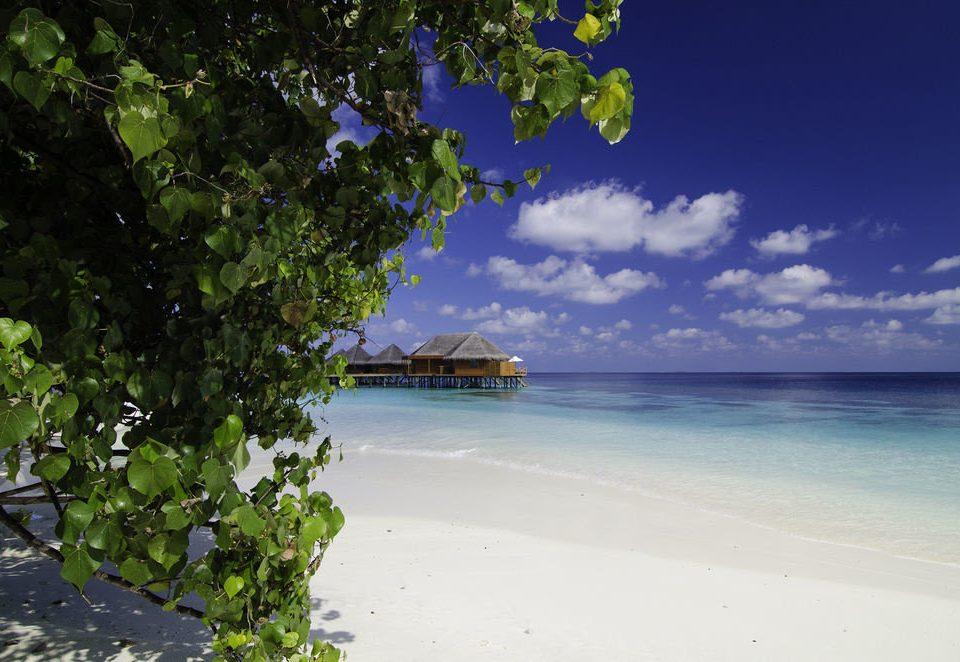 water sky Beach Sea shore tree Ocean Coast tropics sunlight Nature caribbean Island