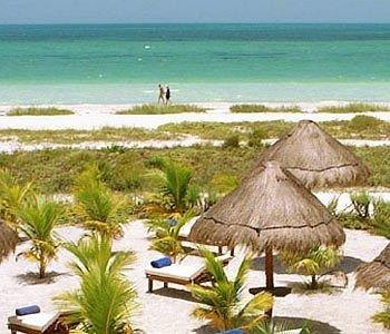 water sky Beach habitat Ocean Nature ecosystem natural environment caribbean Coast shore Resort savanna palm sandy Island