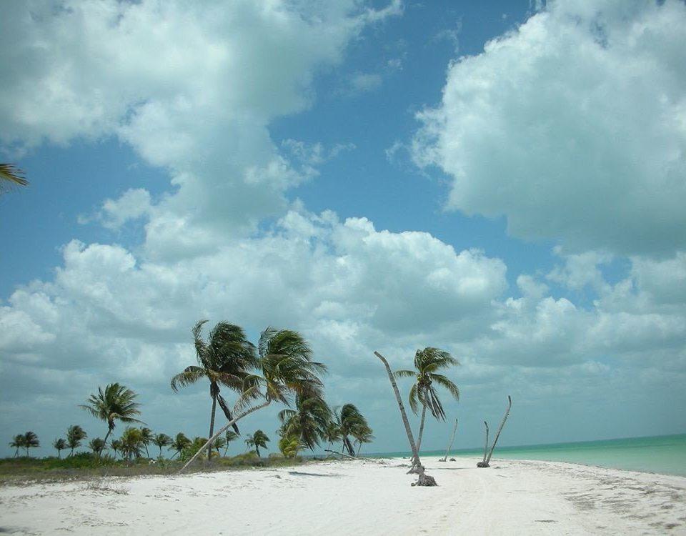 sky Beach Nature cloud shore tree Sea horizon Ocean caribbean arecales plant Coast Island sand tropics wind sandy clouds day