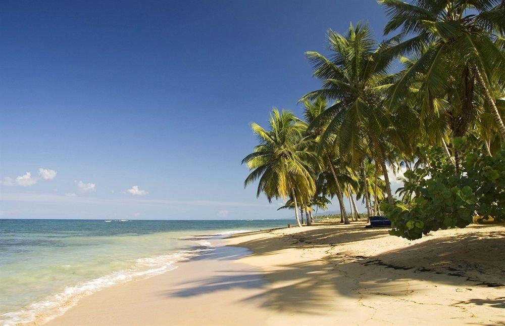 sky tree Beach water palm shore Sea caribbean Coast Ocean Nature plant tropics arecales palm family cape sand Island sandy