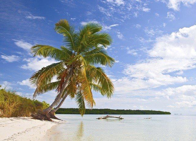 water sky tree Beach plant palm family shore Sea palm caribbean Ocean tropics Coast arecales woody plant Island flower sandy