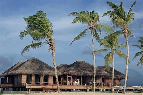 tree sky palm Beach plant palm family caribbean arecales Coast Resort borassus flabellifer Sea tropics Island lined shore