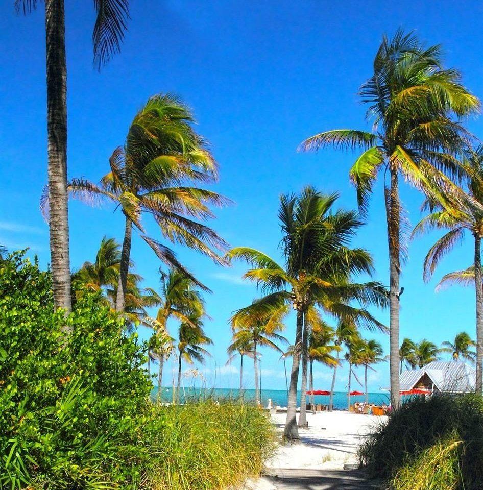 tree palm sky plant vegetation palm family ecosystem caribbean Beach borassus flabellifer Coast land plant arecales woody plant tropics date palm savanna flowering plant Jungle lined bushes surrounded