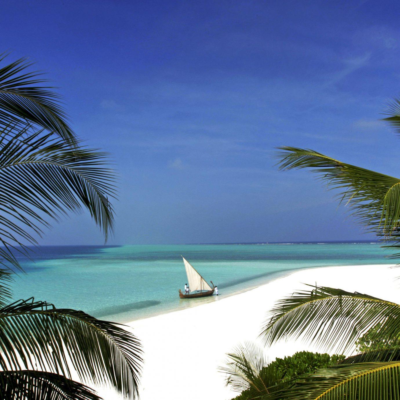 water tree sky plant palm Ocean caribbean palm family Beach tropics Sea arecales Coast swimming pool Resort Jungle overlooking Lagoon beautiful shore sandy