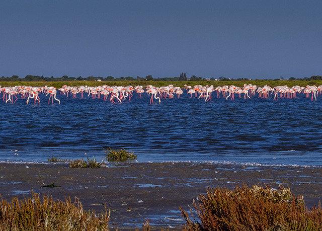 water habitat shore Coast Sea horizon natural environment Ocean Beach Nature wetland marsh Lake wave