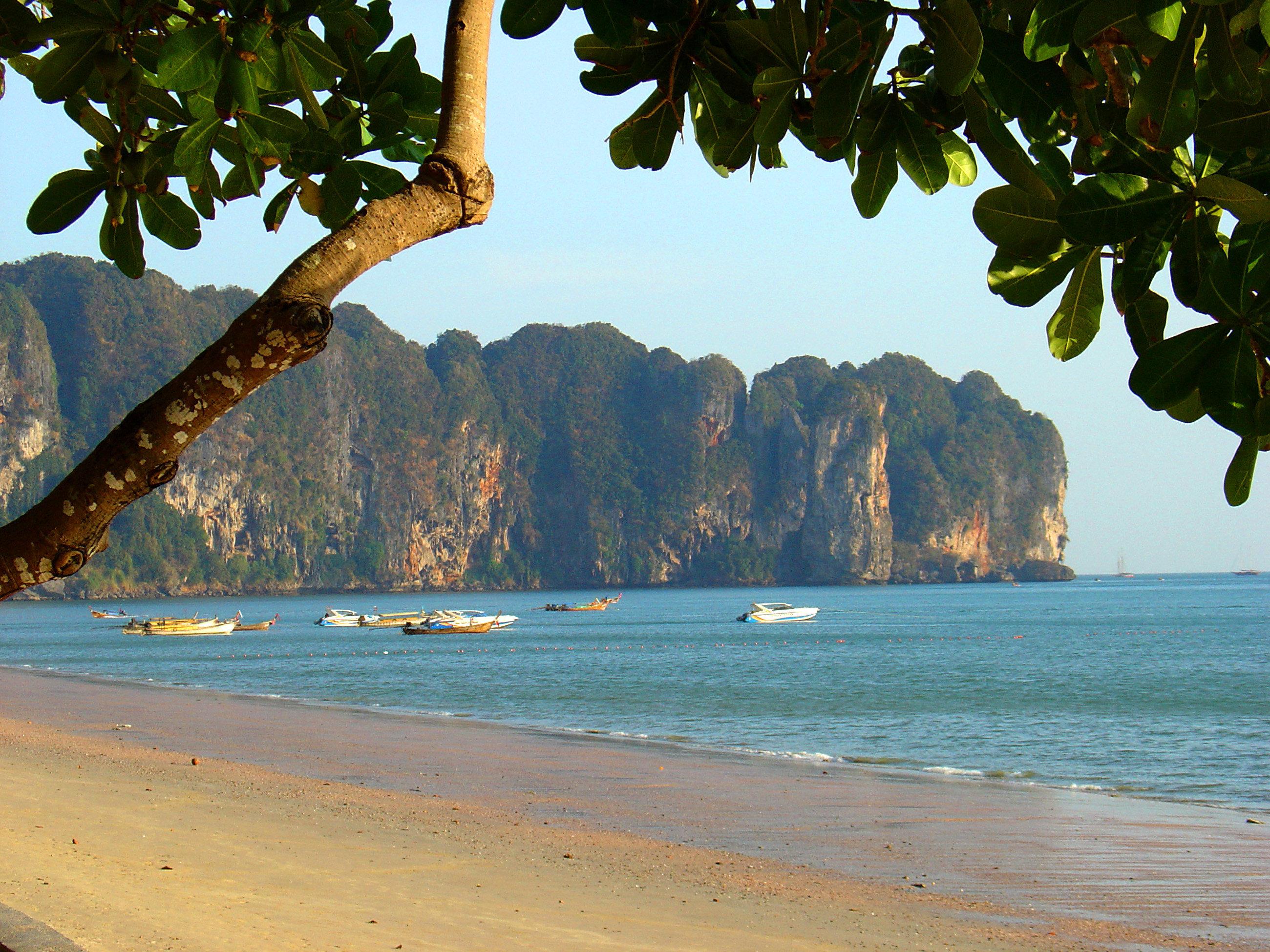 tree water Beach Nature Sea shore tropics Coast Ocean caribbean arecales