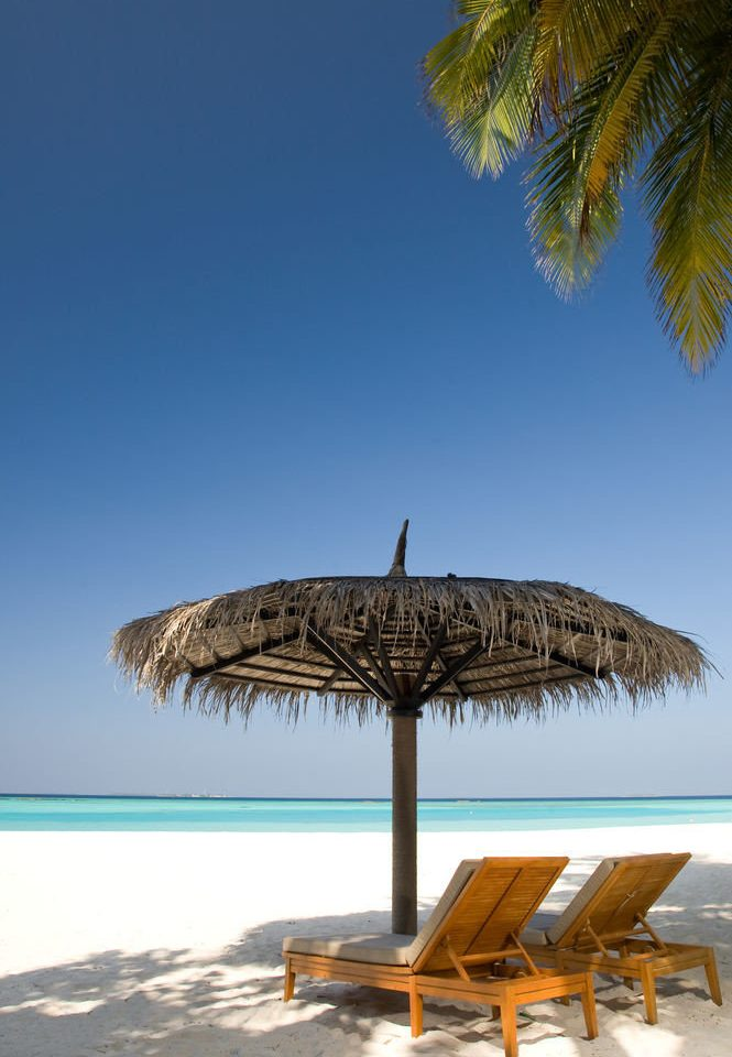 sky umbrella chair Beach shore tree Ocean Sea Coast arecales Nature palm wind palm family plant day lined shade sandy