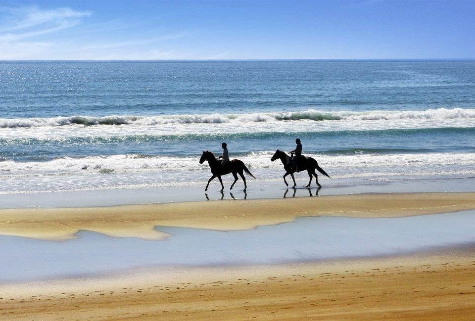 water sky Beach horse shore Sea Coast Ocean natural environment Nature horizon sand wave landscape material sandy