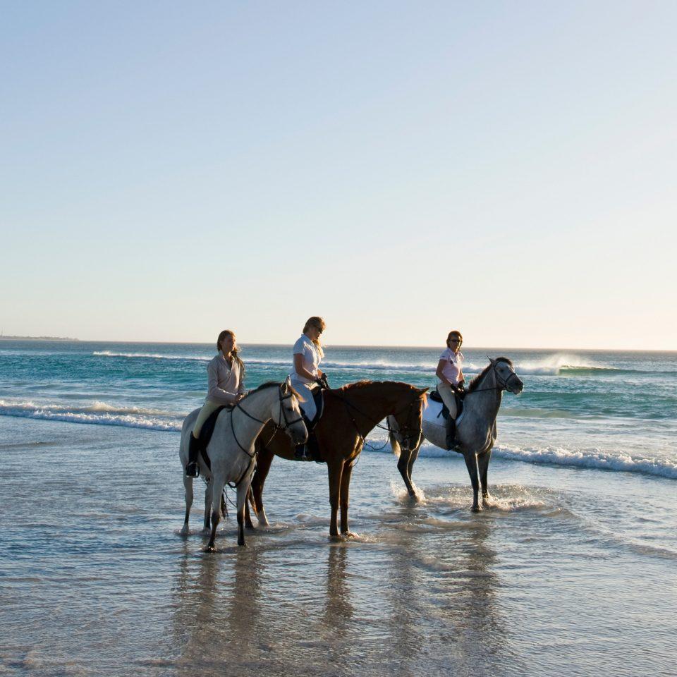 Beach Outdoor Activities Outdoors Romance Sport Sunset sky water Sea Ocean Nature Coast shore horse like mammal sandy